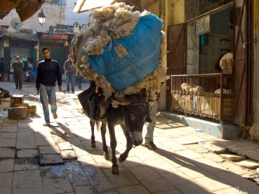 20101102141931_donkey_carrying_cotton_pack